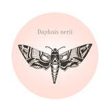 Oleander hawk moth tattoo art. Daphnis nerii. Vector illustration. Royalty Free Stock Photos