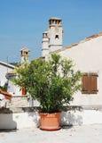 Oleander in Pican 1 Royalty-vrije Stock Afbeeldingen