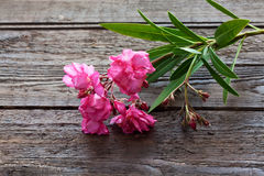Oleander, pink blossoms on wood Royalty Free Stock Images