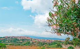 Oleander in Sardinien Lizenzfreies Stockbild