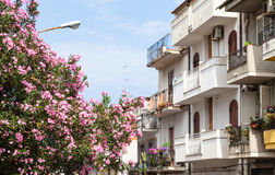 Oleander tree and houses in Giardini Naxos town. Travel to Sicily, Italy - pink flowers on oleander tree and apartment houses on street via vittorio emanuele in Royalty Free Stock Image