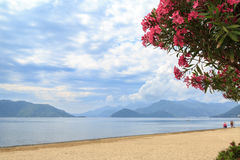 Oleander tree near marmaris beach with mountains Stock Image