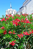 Oleander tree and palace on background Stock Image