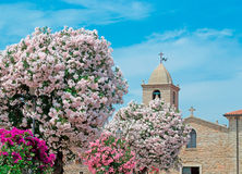 Oleanders by the church Stock Photos