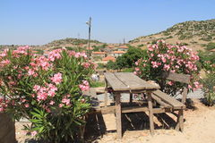 Oleanders en Huizen, Egeïsche dorpen Royalty-vrije Stock Fotografie