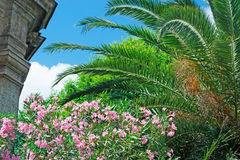 Oleanders and palm Royalty Free Stock Image