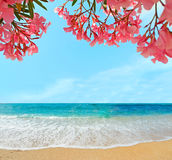 Oleanders and sand Royalty Free Stock Photography