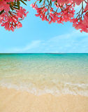 Oleanders by the sea Royalty Free Stock Photo