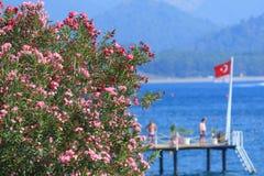 Oleandery kwitną na morzu śródziemnomorskim w Kemer Obrazy Stock
