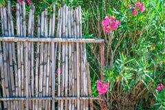 Oleandr runt om staketet Royaltyfria Bilder