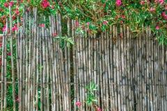 Oleandr runt om staketet Royaltyfri Bild
