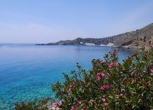 Oleandro e mar azul Foto de Stock