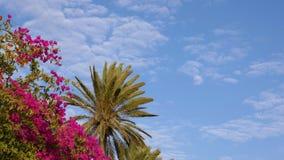 Oleandro e palmeiras de florescência que balançam no vento no fundo claro do céu azul filme