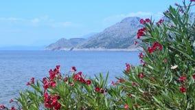 Oleandro, mar e montanhas de florescência no fundo filme