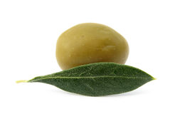 Oleave leaf and fruit. The Olive (Olea europaea) is a species of small tree in the family Oleaceae, native to the coastal areas of the eastern Mediterranean Royalty Free Stock Images