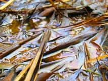 Oleie o derramamento Fotografia de Stock