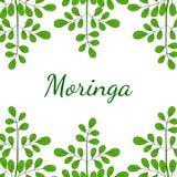 Oleifera Moringa, gränsar 1 i färg royaltyfri illustrationer