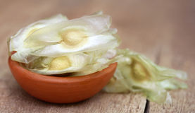 Oleifera zaden van moringa royalty-vrije stock afbeeldingen