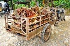 Oleju palmowego tramwaj Zdjęcie Royalty Free