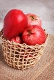 Oleracea d'Acmella de fruit (le jambu, usine de mal de dents, paracress, élisent Photographie stock libre de droits