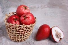 Oleracea de Acmella do fruto (o jambu, planta da dor de dente, paracress, elege Fotos de Stock Royalty Free