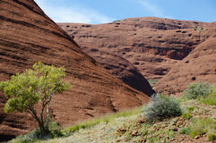The Olgas - Northern Territory - Australia Stock Images