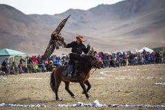 Kazakh Eagle Hunter traditional clothing, while hunting to the hare holding a golden eagle on his arm. Stock Image