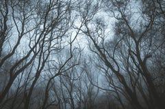 Olhando acima em ramos desencapados de um inverno em uma floresta, com um temperamental escuro edite o azul para editar imagens de stock royalty free