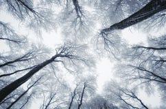 Olhando acima a floresta do inverno Imagens de Stock