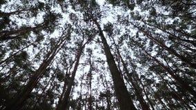 Olhando acima na floresta, o POV através das partes superiores das árvores, sol brilha através da folha vídeos de arquivo