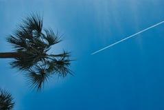 Olhando acima sonhar acordado do voo afastado fotografia de stock royalty free