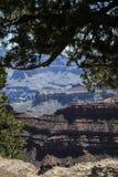 Olhando através de um dossel de árvore Grand Canyon Fotografia de Stock