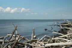 Olhando através do oceano para o horizonte com madeira lançada à costa no primeiro plano, ilha do fogo, NY imagens de stock royalty free