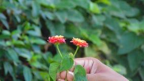Olhando a boa flor e a mão bonita imagens de stock royalty free