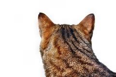 Olhando o gato Fotos de Stock