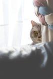 Olhando o gato Fotografia de Stock
