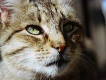 Olhando o gato Foto de Stock