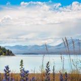 Olhando o lago Tekapo, Nova Zelândia Imagens de Stock