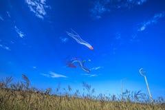 olhando os papagaios no céu Imagem de Stock Royalty Free
