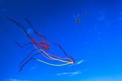 olhando os papagaios no céu Imagens de Stock Royalty Free