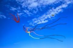 olhando os papagaios no céu Imagem de Stock
