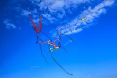 olhando os papagaios no céu Fotografia de Stock