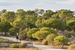 Walking path through pine forest Algarve Portugal stock images