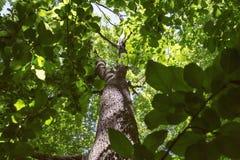 Olhar acima com o verde rico sae em uma floresta foto de stock