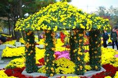 Olhar amarelo da flor fresco no festival da flor Imagem de Stock