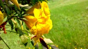 Olhar bonito da flor amarela fotografia de stock