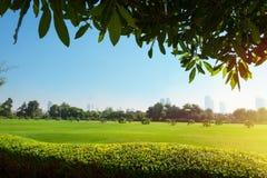 Olhar bonito em ajardinar do parque do verão Imagens de Stock Royalty Free