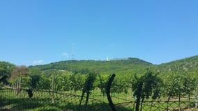 Olhar bonito em uma montanha em Viena Áustria Fotografia de Stock Royalty Free