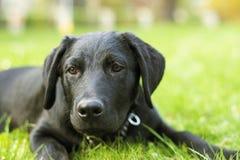Olhar do cão Fotos de Stock Royalty Free