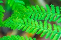 Olhar do close up da samambaia na floresta imagem de stock royalty free
